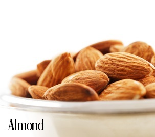 Almond Fragrance Oil 19771