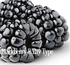 Blackberry and Bay* Fragrance Oil 19833