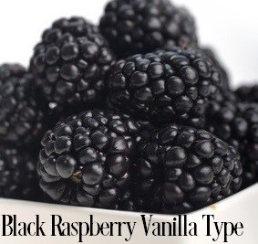Black Raspberry Vanilla* Fragrance Oil 19832