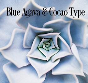 Blue Agava & Cacao* Fragrance Oil 19838
