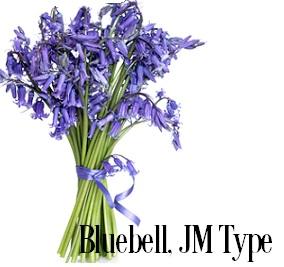 Bluebell (Wild)* Fragrance Oil 19841