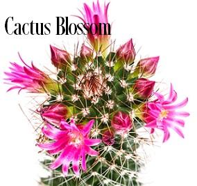 Cactus Blossoms* Fragrance Oil 19874