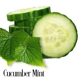 Cucumber Mint Fragrance Oil 19981