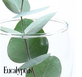 Eucalyptus Fragrance Oil 19999