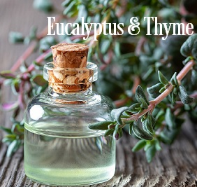 Eucalyptus & Thyme Fragrance Oil 19998