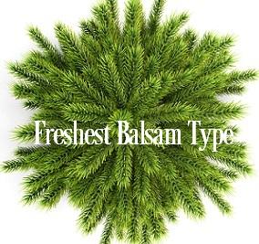 Freshest Balsam* Fragrance Oil 20021