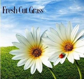 Fresh Cut Grass Fragrance Oil 20018
