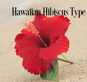 Hawaiian Hibiscus* Fragrance Oil 20058