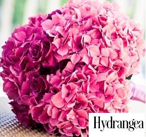 Hydrangea Fragrance Oil 20074