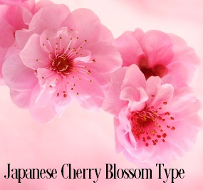 Japanese Cherry Blossoms* Fragrance Oil 20084