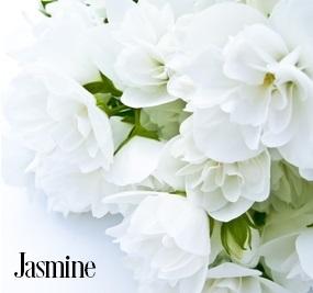 Jasmine Fragrance Oil 20085