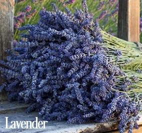 Lavender Fragrance Oil 20108
