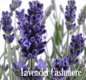 Lavender Cashmere Fragrance Oil 20105