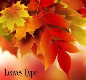 Leaves* Fragrance Oil 20114