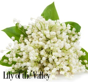 Lily Of The Valley Fragrance Oil 20127