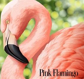 Pink Flamingo Fragrance Oil 20205