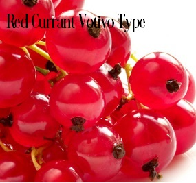 Red Currant* Fragrance Oil 20257