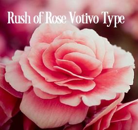 Rush of Rose* Fragrance Oil 20272