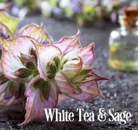 White Tea & Sage* Fragrance Oil 20385